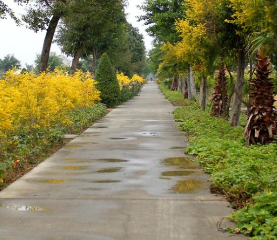 雨后图片.png