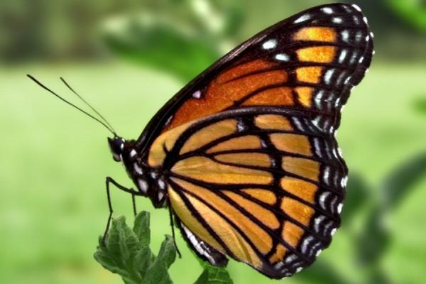 27年来累积少了75%,会飞的昆虫为何会越来越少?