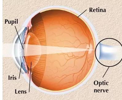 图为眼球的解剖结构.-有望开启量子全息术新时代