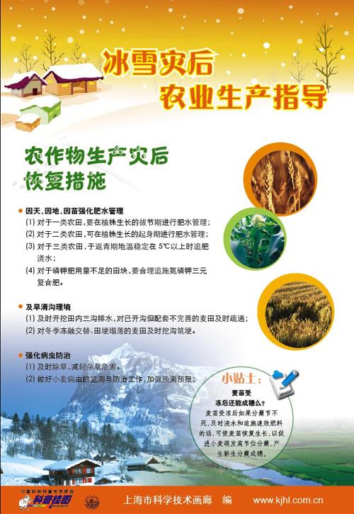 冰雪灾后蔬菜林果生产指导