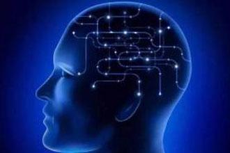 嗅觉与空间记忆力受同一个脑区控制