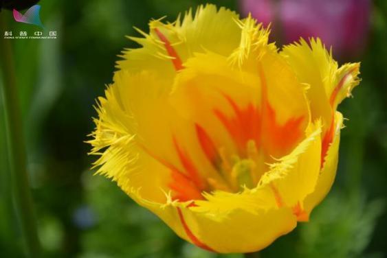 百花竞放争奇斗艳 这里的春天超有范儿