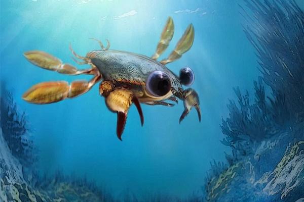 新发现的远古螃蟹化石,长得好像动画角色