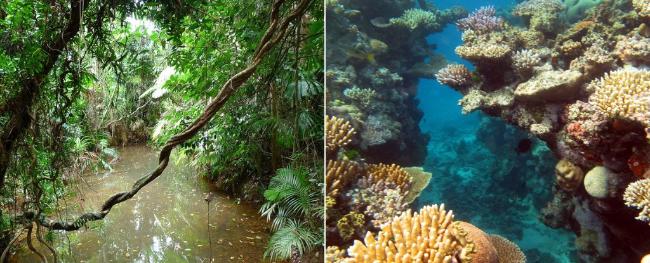 當我們爭相拯救大堡礁時,地球上最古老的雨林消失了