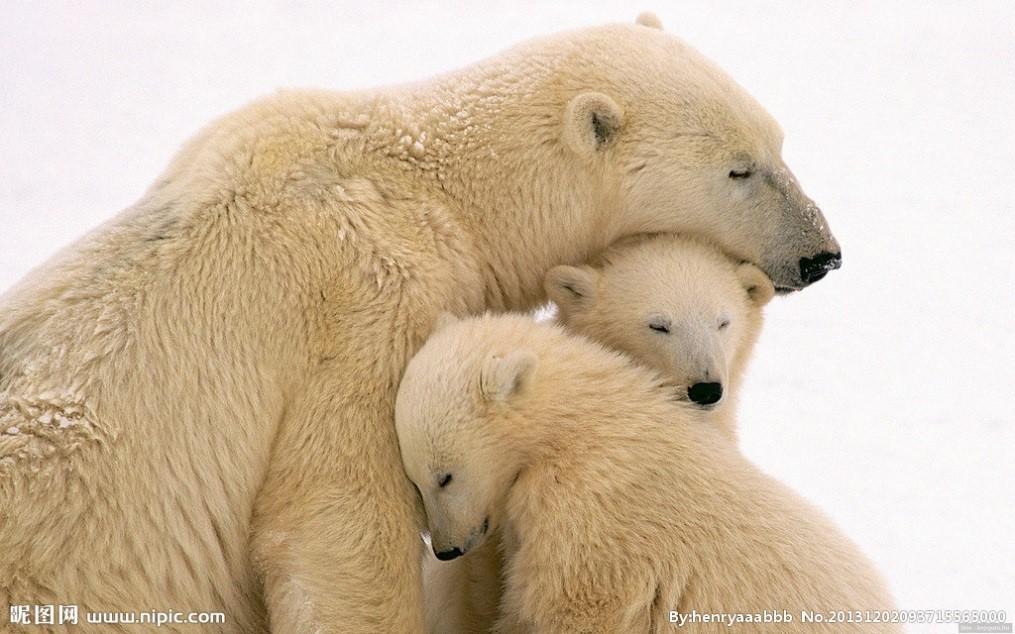 北极熊(图片来源于昵图网)鲸鱼飞起图片